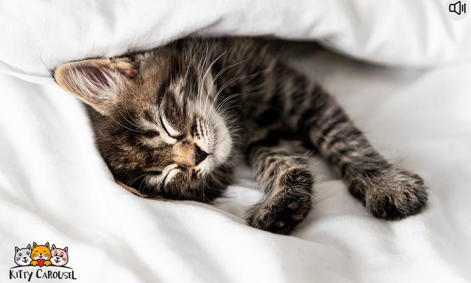 Kitty Carousel: Sleepy Cat