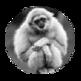 Gibbon Tabs 插件