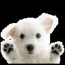Lovely Dogs 插件