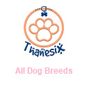 All Dog Breeds - Types Of Dogs - Thanesix.com
