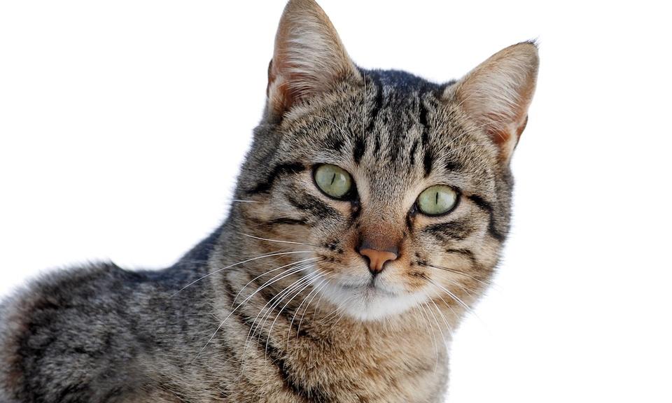 Unread Cats