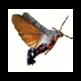 Macroglossa - Visual Search Plugin 插件