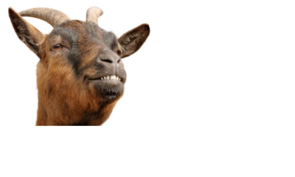 Non-political goat