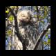 Болотная сова - пазлы