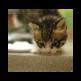 Kitty Maker 插件