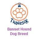 Basset Hound Dog Breed - Thanesix.com