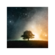 Lone Tree - 静寂之树星空主题