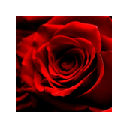 ROSEBUDDY v1.0 by LOVEWARE!