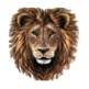 Lion Full HD Wallpapers & New Tab