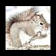 WeChatSquirrel 插件