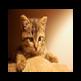 猫壁纸HD 2019