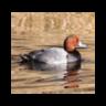 Duckpower 1.1