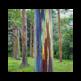 Eucalipto Arco Iris 插件