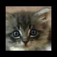 Nigel to Kitten 插件