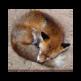 Fox Screen Saver 插件