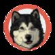 Healing Slideshow -Dog- 插件