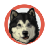 Healing Slideshow -Dog-