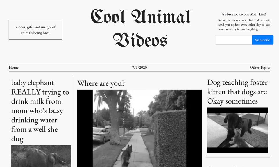 Cool Animal Videos