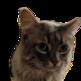 Kitten Savant 插件