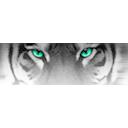 Snow Tiger 插件