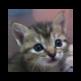 Kitten Around!