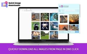 Quick Image Downloader插件,网页图片批量下载器