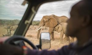 我在肯尼亚大象孤儿院领养了一头小象!